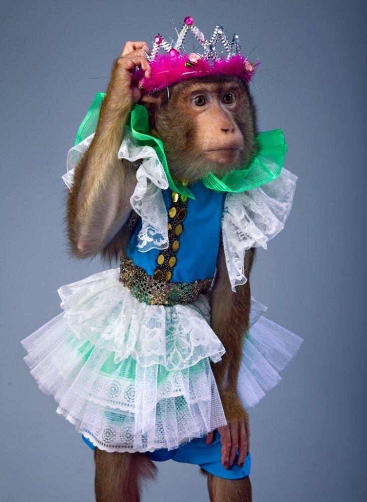картинка обезьяна в одежде подкова, прибитая фок-мачте